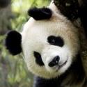 WWF Спасете дивата природа!