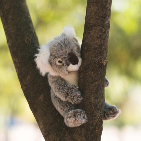 WWF_malka_plyushena_koala_1